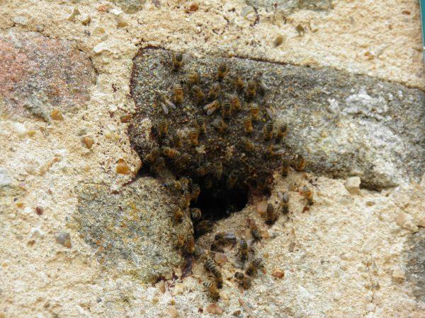 Le nid d'abeille de l'église de Saint-Céneri-le-Gerei